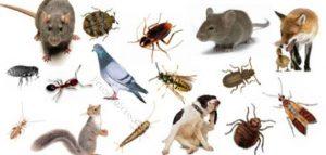 شركة مكافحة حشرات بضباء