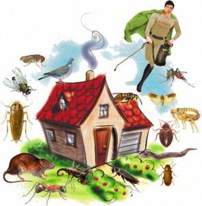 شركة مكافحة حشرات ببريده