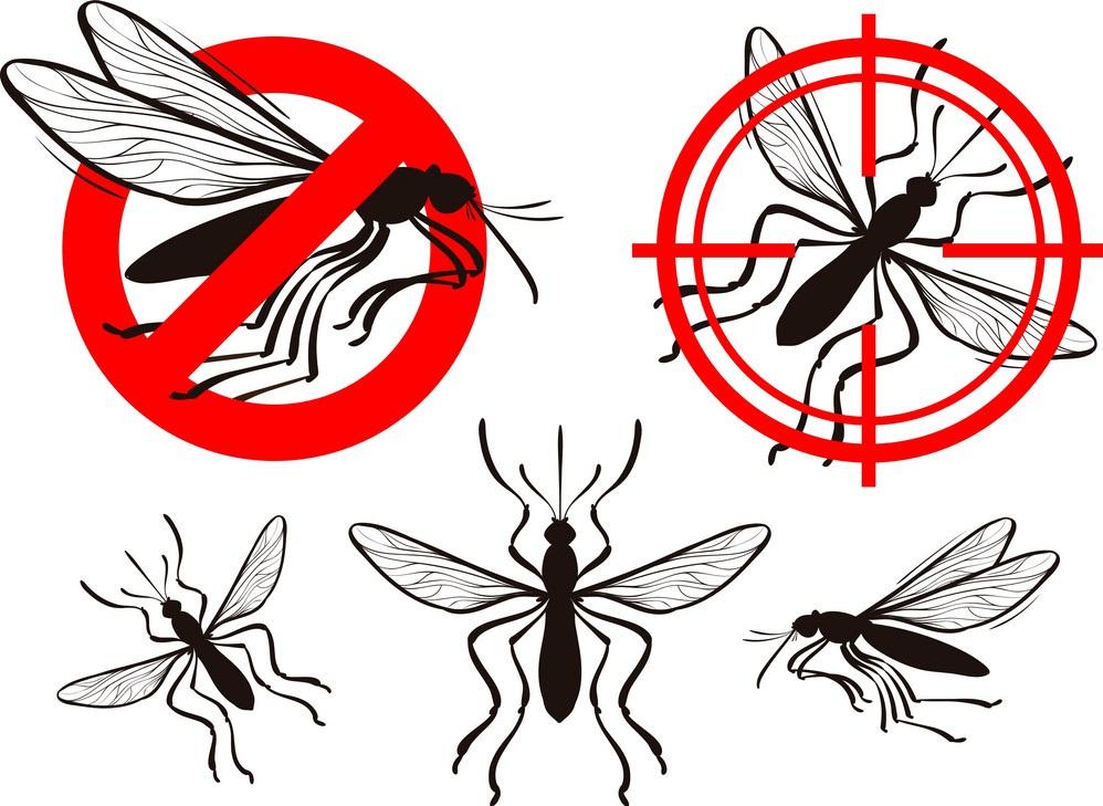 شركة مكافحة حشرات ببيشا