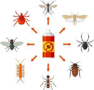 شركة رش مبيدات عنيزة