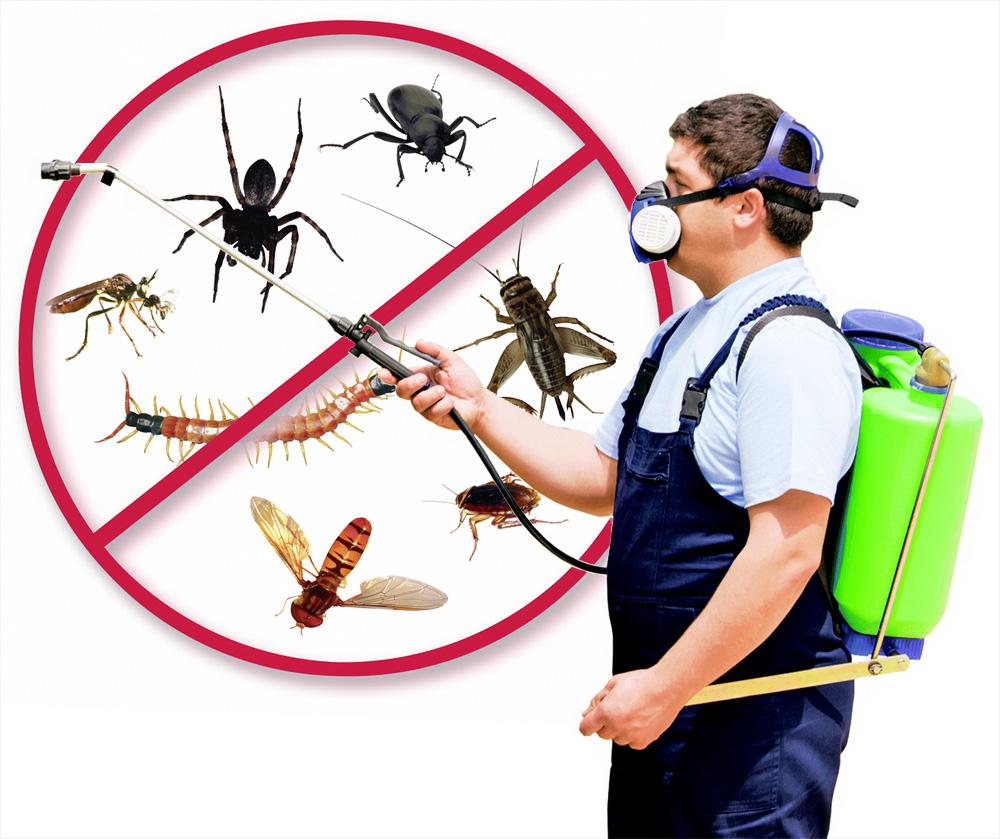 شركة رش مبيدات ببيشا