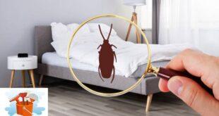 شركة مكافحة حشرات بالدوادمي